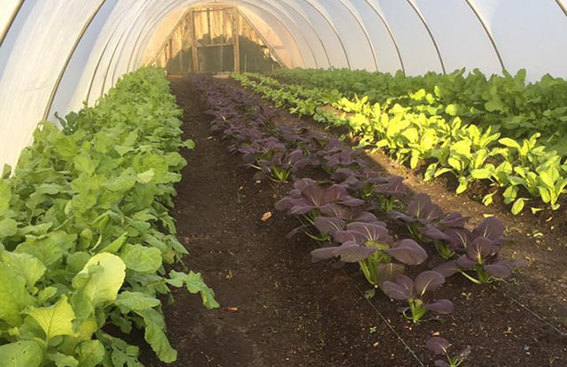 Winter crops